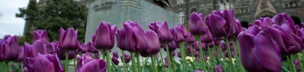 tulips1a